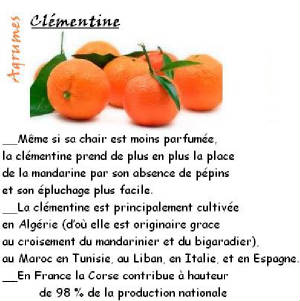 FRUITS_exotic/fruits_agrumes_clementine.jpg