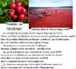 FRUITS_exotic/fruits_baie_airelles.jpg