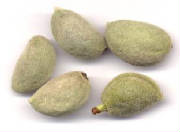 glossary_a/herb_almond_youngfruit.jpg