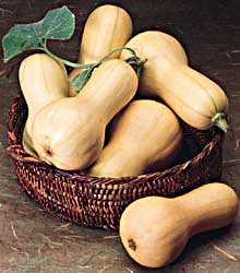 glossary_b/fruit_butternutsquash.jpg