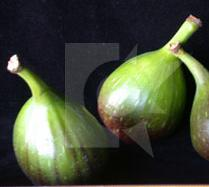 glossary_f/fruit-fig_white.jpg